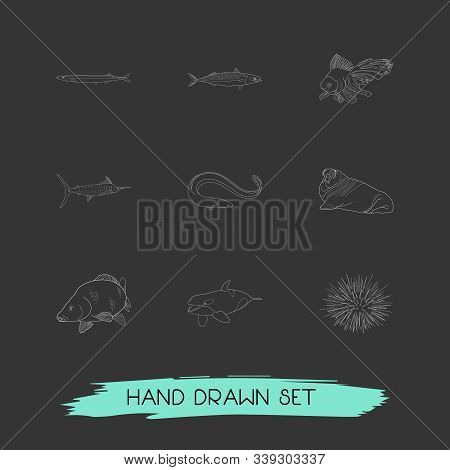 Set Of Fauna Icons Line Style Symbols With Sea Urchin, Marlin, Walrus And Other Icons For Your Web M