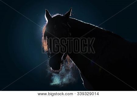Portrait Of An Adult Horse Against A Dark Background. The Silhouette Is Outlined By A Bright Light.