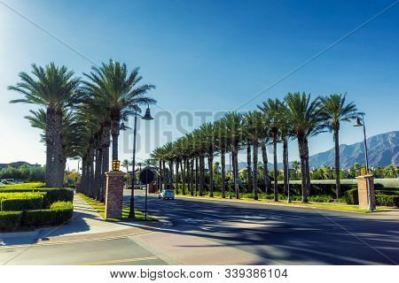 Alley Of Palms In The Streets Of Ontario, California