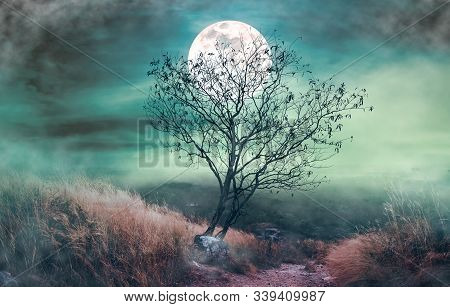 Landscape Of Dark Night Sky With Clouds. Beautiful Bright Full Moon Above Wilderness Area In Forest.