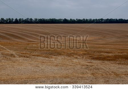 Hayfield. There Are Many Stacks Around. Meadow In The Early Autumn. Dry Plants Around. Gold Colors.