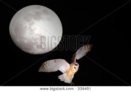 Barn Owl And Full Moon