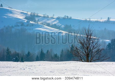 Mountainous Countryside In Wintertime. Tree On Snow Covered Meadow. Wonderful Weather On A Bright Su