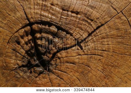 Cracked Old Teak Wood, Old Teak Wood Is Cracked, Brown In Color, Cracked Due To Natural Factors, Nam
