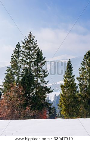 Fir Trees On The Snow Covered Mountain Meadow. Beautiful Winter Landscape With The Distant Ridge. Su