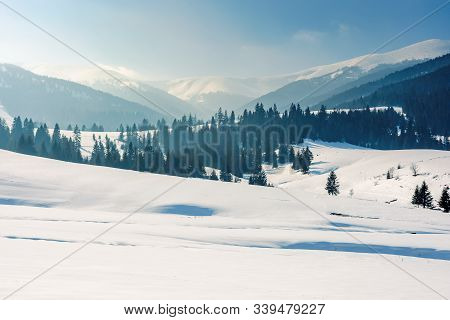 Mountainous Landscape In Wintertime. Stunning Rural Scenery On A Bright Sunny Day. Spruce Forest On