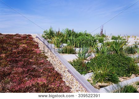 Root Zone Waste Water Sewage Treatment Plant On The Extensive Green Ecological Living Sod Roof