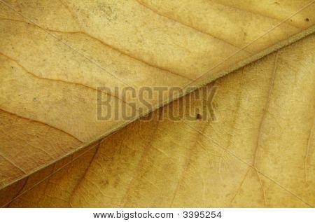 Dried Leaf Closeup