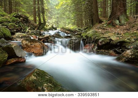 Forest stream Nature background Forest stream river Nature background autumn Forest brook Nature background fall pine spruce trees water creek stone Nature background foliage leaves waterfall Nature background Nature background woods Nature background.