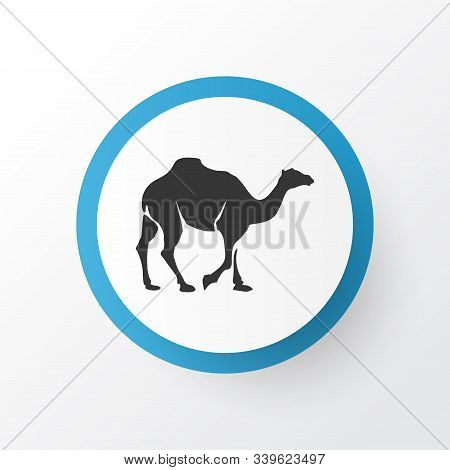 Camel Icon Symbol. Premium Quality Isolated Dromedary Element In Trendy Style.