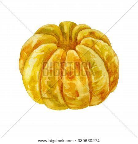 Watercolor Illustration. Mandarin. The Whole Fruit Of Mandarin. Peeled Tangerine