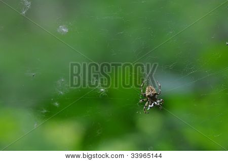 Close Up Of A Brown Spider