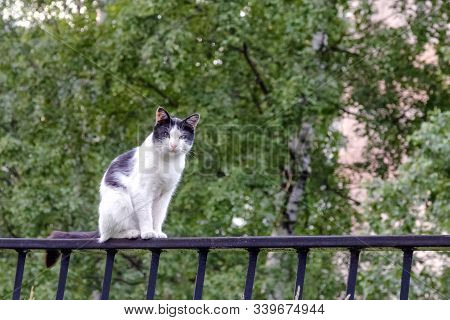 Street Cat Light Coloring, On The Fence Peacefully Watching As The Photographer Approaches.