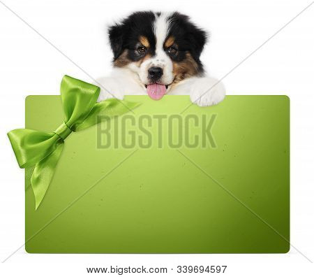Puppy Dog Showing Green Gift Card With Ribbon Bow Isolated On White Background, Vet And Pet Store Te