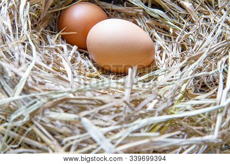 The Eggs In The Ovaries Are Made Of Straw