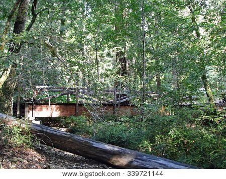 Wooden Footpath Bridge Big Basin Redwoods State Park