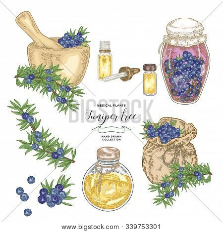 Juniper Tree Branch. Colorful Berries Of Juniper With Glass Bottles And Jars. Hand Drawn Medical Pla
