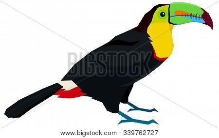 Wild Birds Keel-billed Toucan Vector Illustration Isolated Object Set