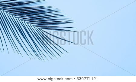 Tropical Palm Leaves On Blue Background. Tropical Palm Leaves Top View Or Flat Lay. Copy Space For T