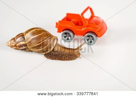 Selective Focus Of Slimy Brown Snail Near Red Toy Car Isolated On White