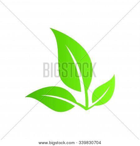 Leaf Icon, Leaf Icon Eps10, Leaf Icon Vector, Leaf Icon Eps, Leaf Icon Jpg, Leaf Icon Picture, Leaf