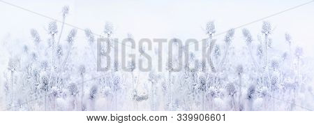 Winter Landscape, Ice Crystal On Thistle, Burdock, Morning Fog And Frozen Dry Plant