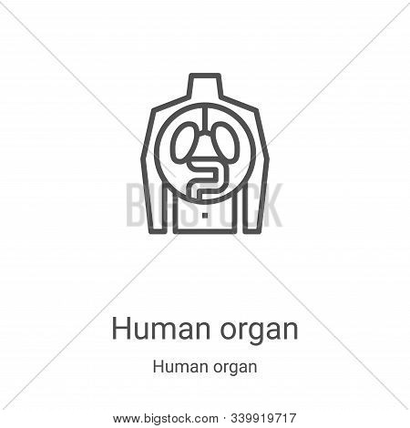 human organ icon isolated on white background from human organ collection. human organ icon trendy a