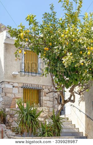 Vertical Photo Of Lemon Tree Growing Next To A Two-story Building. Ripe Yellow Citrus Fruits Hang On