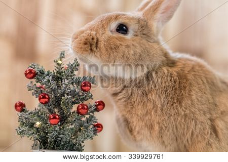 Rufus Rabbit Chins Small Decorated Christmas Tree