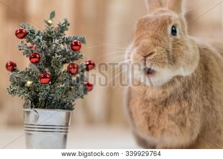 Small Decorated Christmas Tree With Adorable Rufus Rabbit Making Cute Facial Expressions, Selective