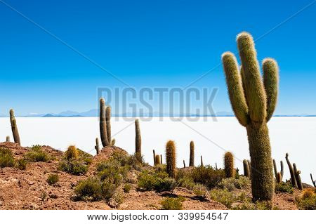 Big Green Cactuses On Incahuasi Island, Salar De Uyuni Salt Flat, Altiplano, Bolivia. Landscapes Of