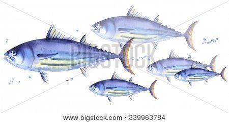 School of Striped tuna, Skipjack tuna. Watercolor illustration fish on white background