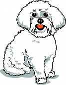 Maltese dog or white poodle with a happy expression. poster