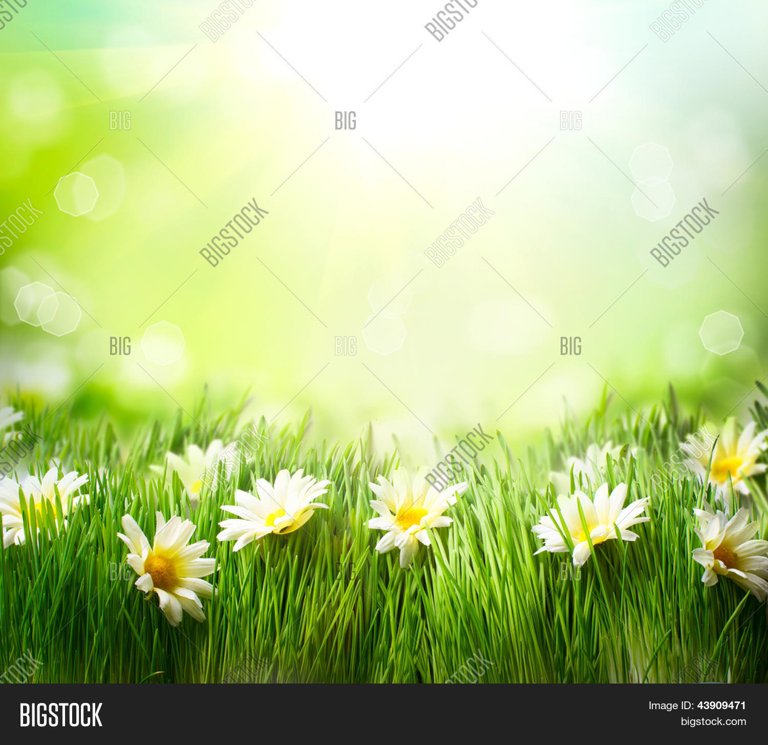 Spring Meadow Daisies Image Photo Free Trial Bigstock