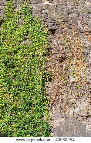 Stone Wall Covered With Leaves