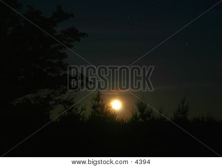 Full Moon Over Pine Trees