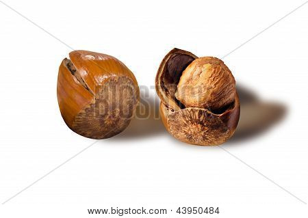 One ripe hazelnut opened to reveal the kernal poster