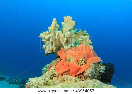 Eggs of Spanish Dancer with soft coral poster