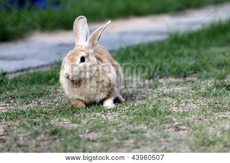 The Brown Rabbit Is Sit.