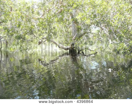 Reflections Of Old Tree In River