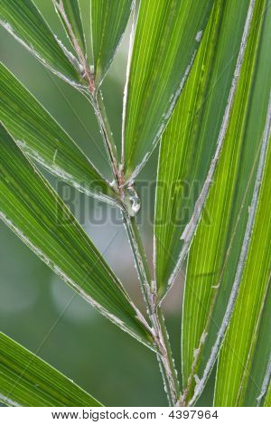 Green Palm Frond