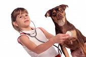 young girls listens threw her stethoscope to hear her dogs heart poster
