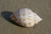 seashell closeup on the beach animals and wild life poster