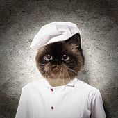 Funny fluffy cat cook in a robe . collage poster
