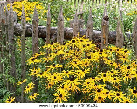Orange Coneflower Near Wooden Fence