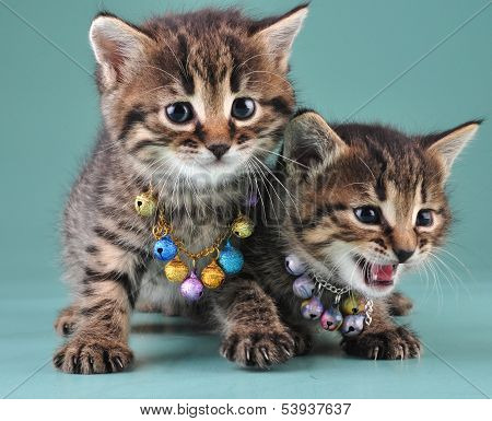 Little kittens with small metal jingle bells beads . Studio shot. poster