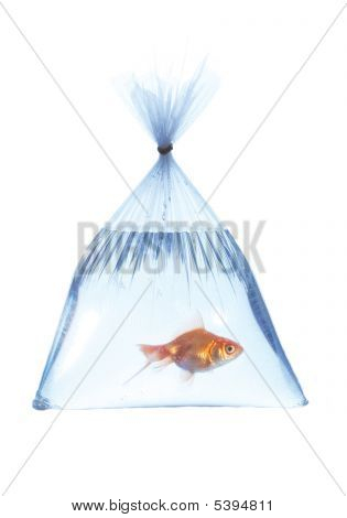 Fish In A Platic Bag