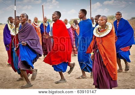 TANZANIA, AFRICA-FEBRUARY  9, 2014: Masai warriors dancing traditional jumps as cultural ceremony, review of daily life of local people on February 9, 2014. Tanzania.