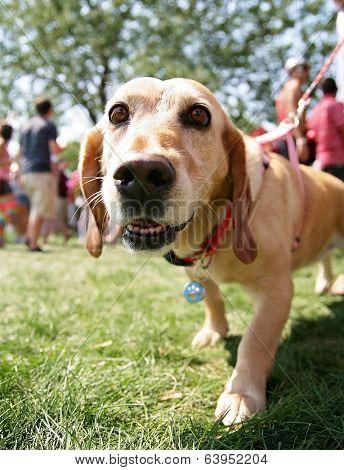 a cute mixed breed dog at a local park