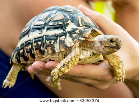 Beautiful Turtle In A Woman's Hand